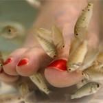 Педикюр делают… рыбки